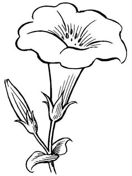 Цветы для раскрашивания картинки – Раскраски Цветы скачать ...