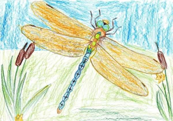 Картинки про насекомых – Ой! – Всё о детях – беременность ...