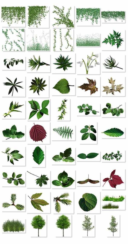 того, листья деревьев какие бывают с картинками своей