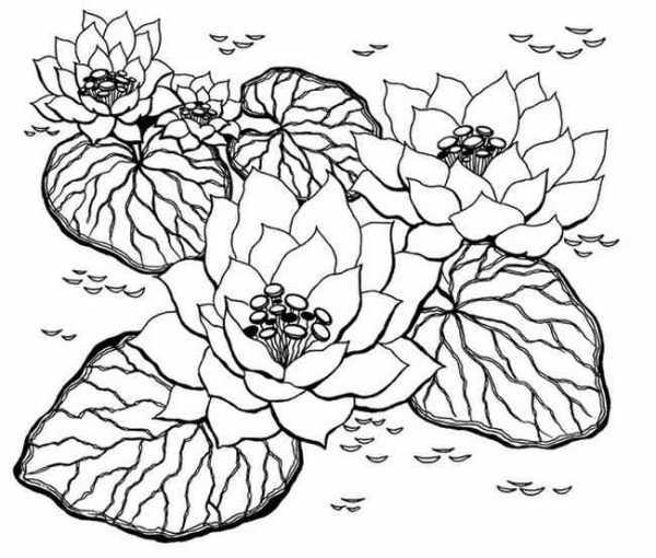 Раскраски для детей растения – Раскраски Растения. Скачать ...