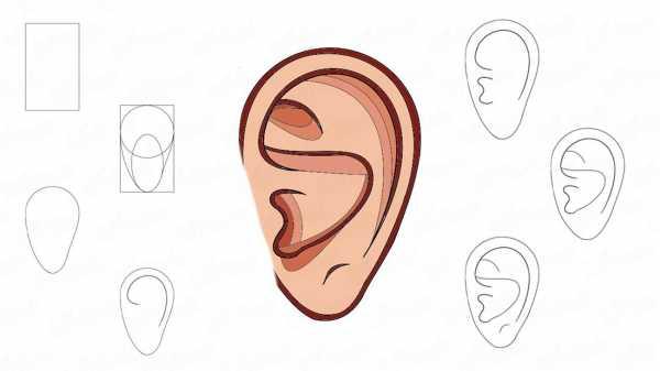 ухо раскраска раскраска длинное ухо прыгает высоко зайка