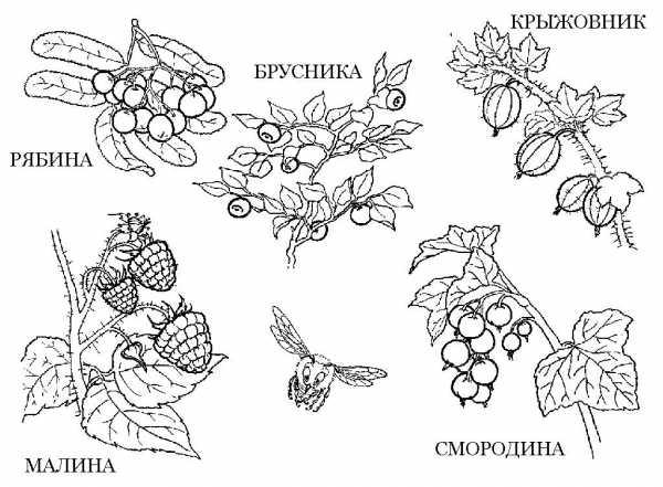 Ягоды и грибы в лесу картинки для детей – ягоды картинки ...